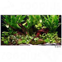 """Set piante per acquario zooplants """"""""paese delle meraviglie"""""""" - - 18 piante, 1 radice piantata."""