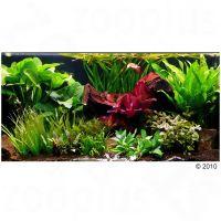 """Set di piante per acquario zooplants """"""""teatro verde xxl"""""""" - - 33 piante."""