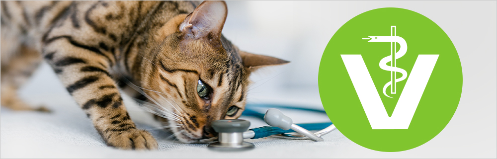 Tierarzt Services