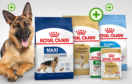 Valuta Royal Canin e ricevi 50 zooPunti!