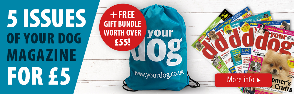 zooplus customer offer with Your Dog Magazine: 5 issues for £5 plus goodies worth £55!