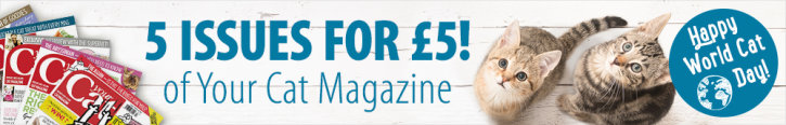 zooplus customer offer with Your Cat Magazine: 5 issues for £5 plus goodies worth £25!