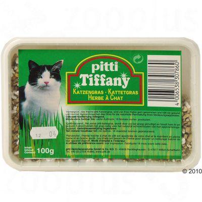 pitti kattgräs på bricka – 100 g