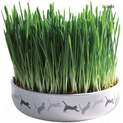 Keramikskål för kattgräs 15 x 4 cm + 50 g frön till kattgräs