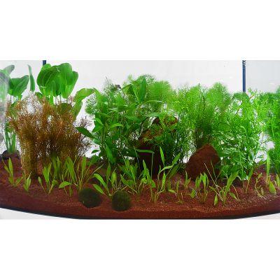 Aquariumplanten Zooplants Guppy-Platy-aquarium 15 Planten