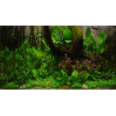 Amazonas Unterwasserlandschaft Zooplants - 52 P...