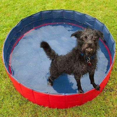 Doggy Pool - 80 x 20 cm