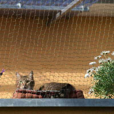 Kissan suojaverkkorullat - oliivinvihreä, rautalangalla vahvistettu