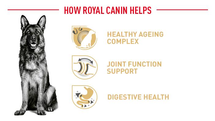 Vorteile der Royal Canin Hundenahrung