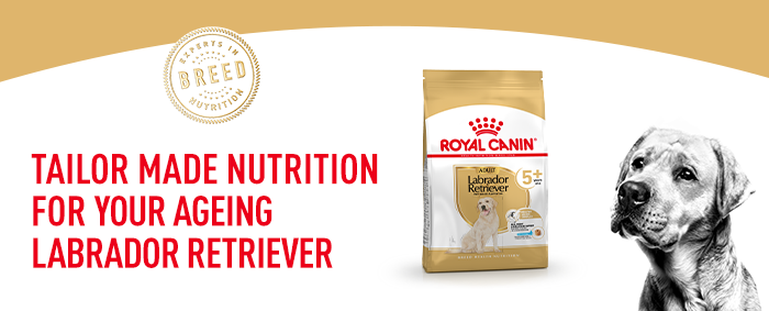 Royal Canin Labrador Retriever 5+