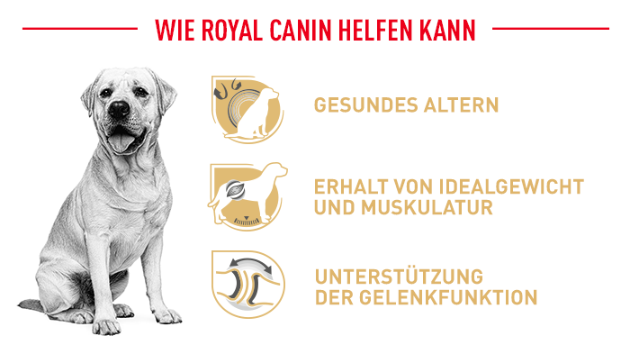 Royal Canin Labrador Retriever 5+