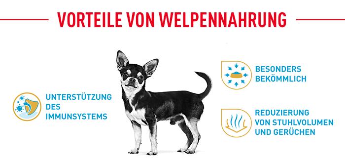 Royal Canin BHN Chihuahua Puppy