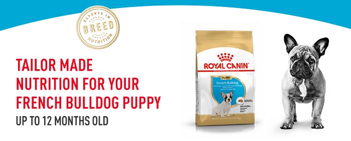 Royal Canin Französische Bulldogge Puppy Welpen-Trockenfutter