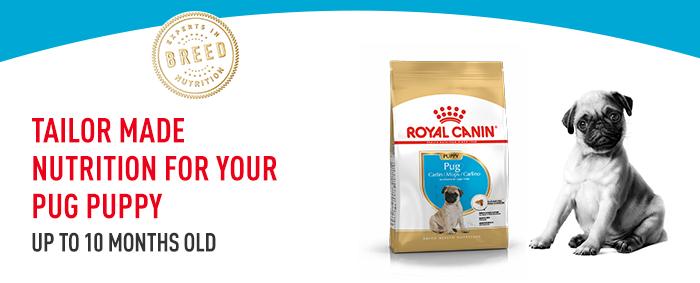 Royal Canin Breed Mops Puppy