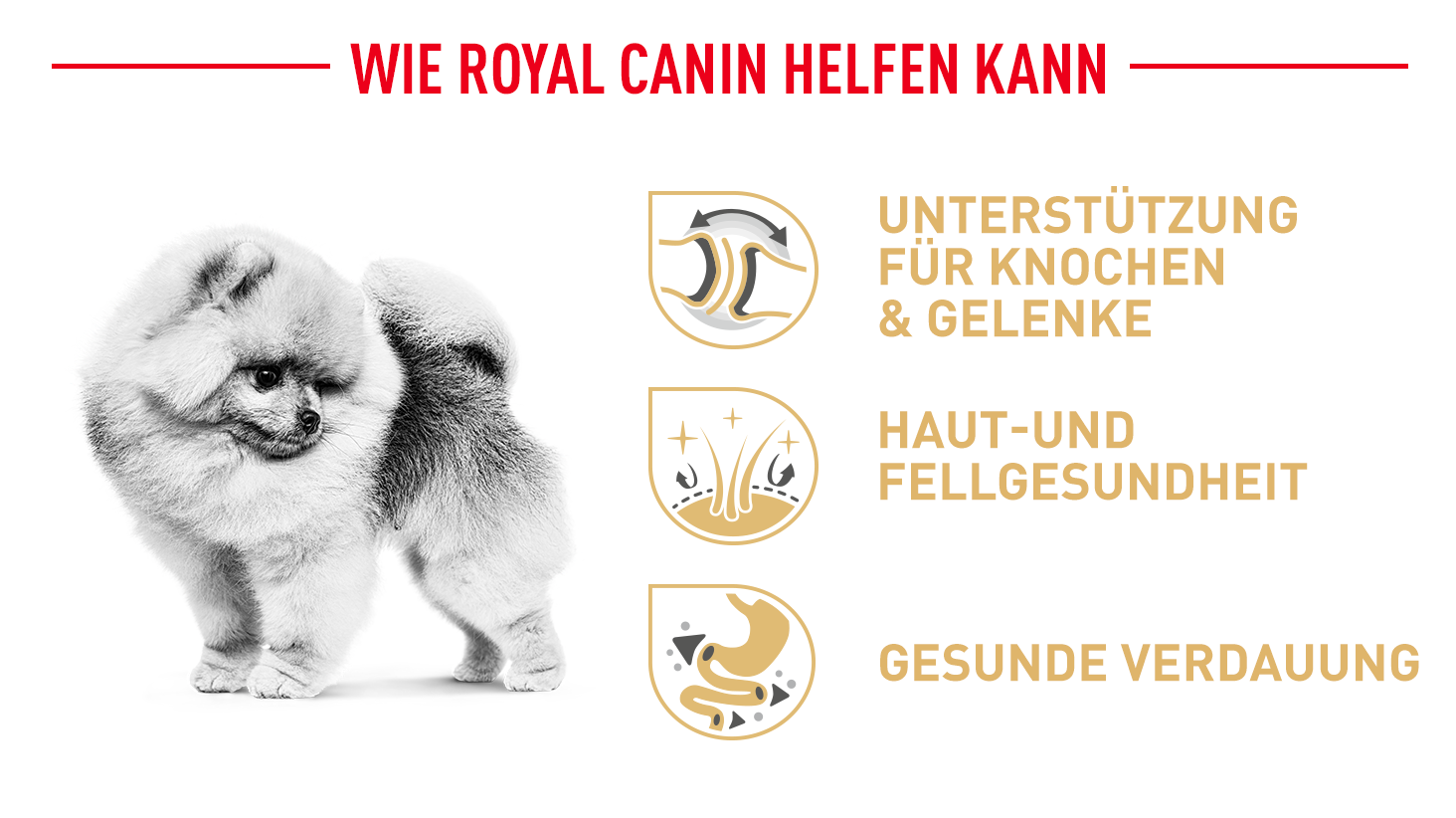 Royal Canin Pomeranian Breed Nassfutter