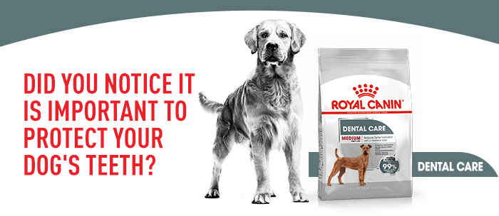 Royal Canin Dental Care Medium