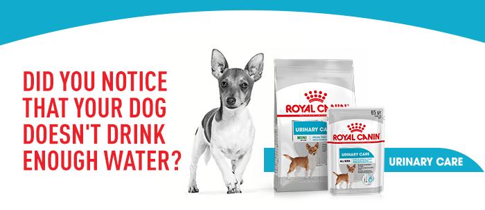Royal Canin Urinary Care Mini