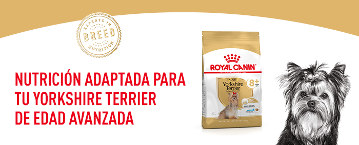 Royal Canin Yorkshire Terrier 8+
