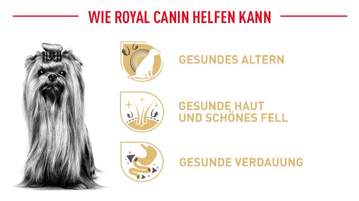 Royal Canin unterstützt Ihren Yorkshire beim gesunden Altern