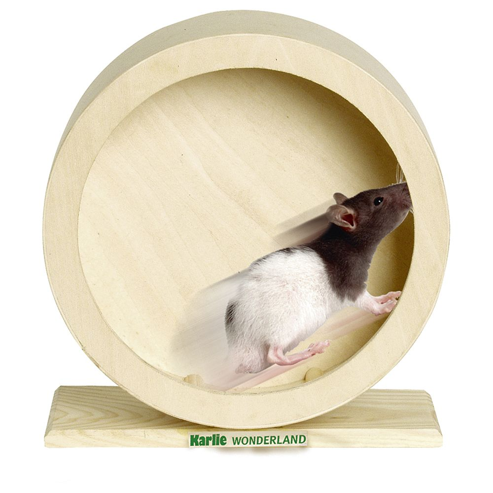 Wonderland Wooden Exercise Wheel - Diameter 20cm