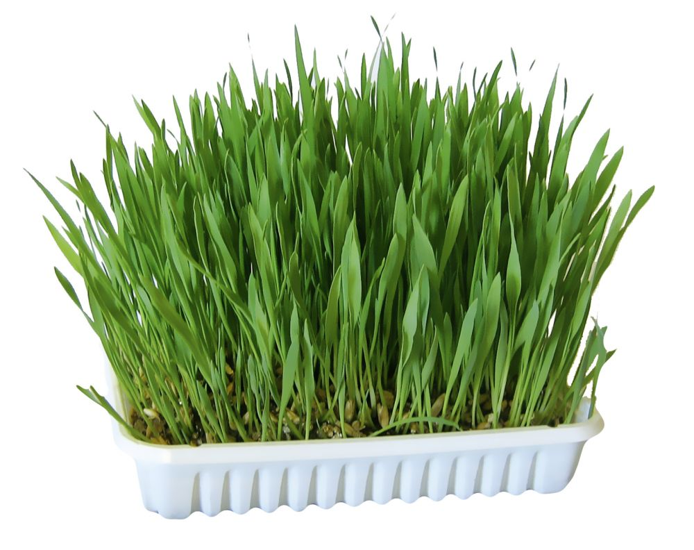 100g Nibble Grass Rabbit & Small Pet Food