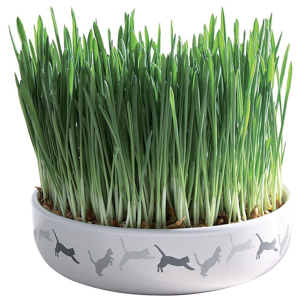 Ceramic Cat Grass Bowl - Bowl + 50g Seed