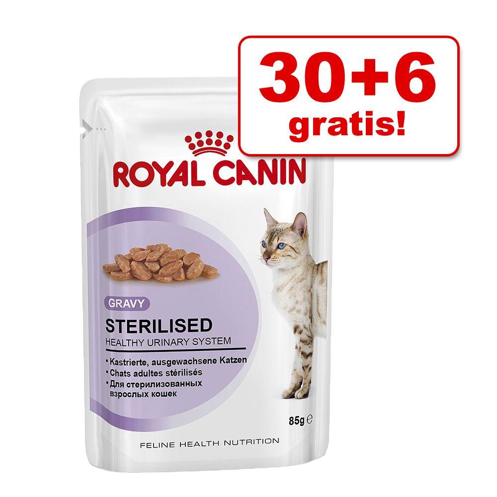 30 + 6 gratis! Royal Canin mokra karma dla kota, 36 x 85 g - Instinctive w galarecie