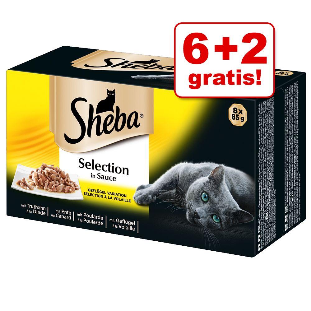 6 + 2 gratis! Pakiet próbny Sheba tacki, 8 x 85 g - Selection in Sauce