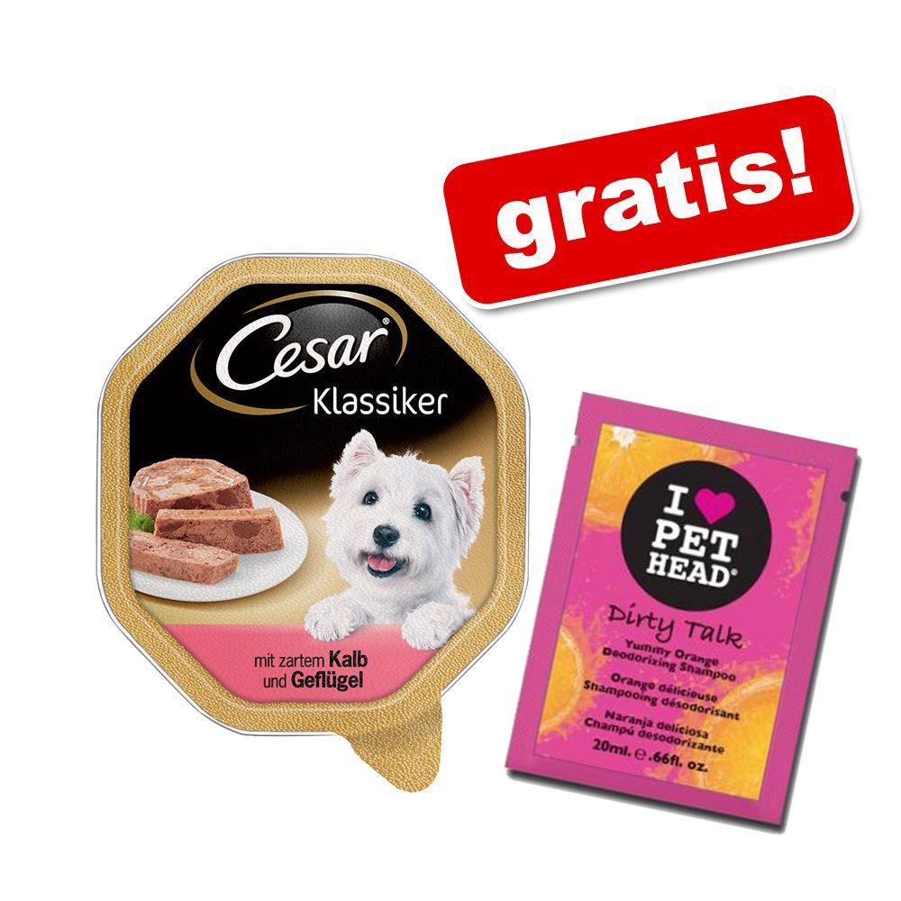 Cesar 28 x 150 g portionsform + 20 ml Pet Head Shampoo Dirty Talk på köpet! - Garden Variety Fjäderfä, grönsaker & ris
