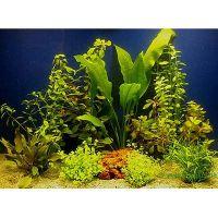 Set di piante acquatiche zooplants per acquari di 80 cm - - 10 piante in vaso.