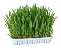 Nibble Grass - 100g