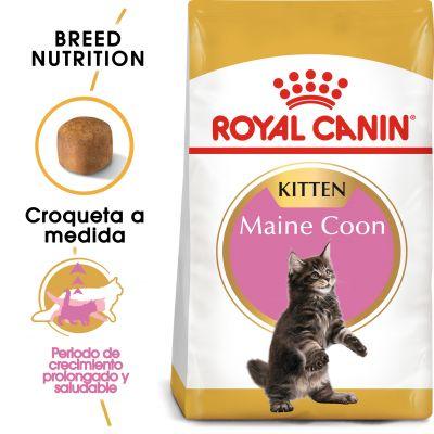 Royal Canin Maine Coon Kitten - 4 kg