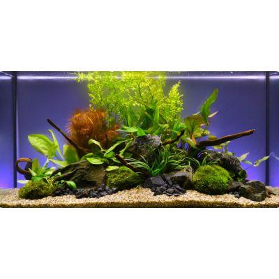"""Aquarienpflanzen Zooplants """"Bunte Mischung"""" - 13 Pflanzen"""