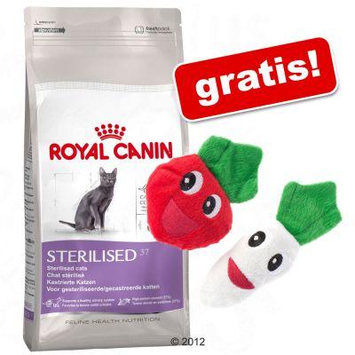 10-kg-royal-canin-catnip-veggies-kattelegetoj-gratis-outdoor-7