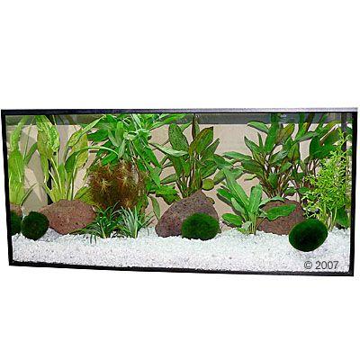 aquariumplanten-zooplants-bonte-mix-13-planten