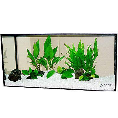 aquariumplanten-zooplants-baarsbekken-7-planten