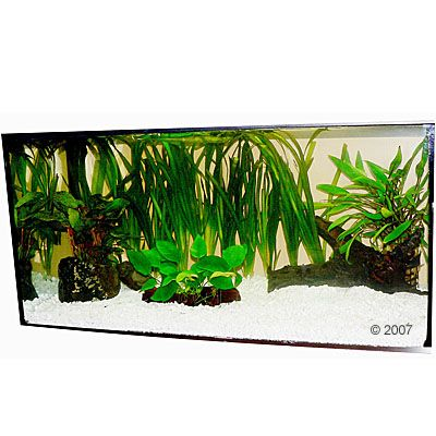 aquariumplanten-zooplants-discus-assortiment-13-planten