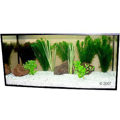 aquariaplanten-zooplants-goudvis-in-het-water-9-planten