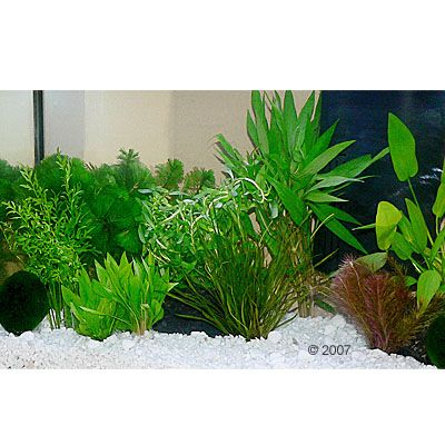 aquariumplanten-zooplants-guppy-platy-aquarium-15-planten