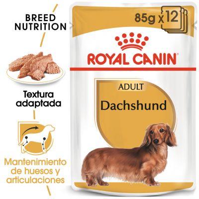Royal Canin Breed Teckel en sobres - 48 x 85 g - Megapack