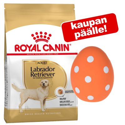 Royal Canin Breed + lateksinen vinkuva muna kaupan päälle! - Cocker Adult (12 kg)