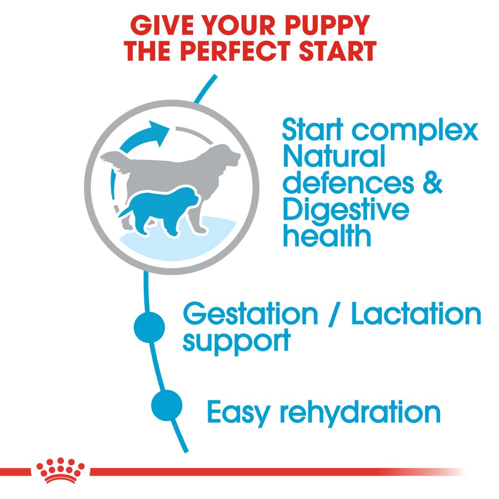 Royal Canin Maxi Starter Mother Amp Babydog Buy Now At