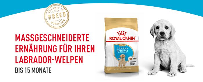 Royal Canin Breed Labrador Retriever Puppy Welpen-Trockenfutter
