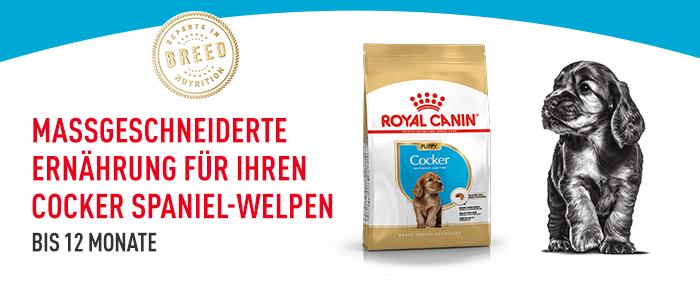 Royal Canin Cocker Spaniel Puppy