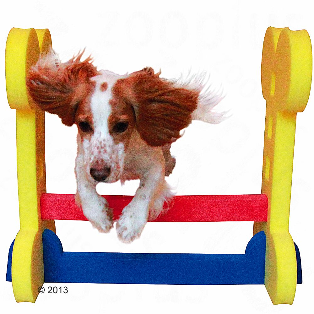 Rosewood Small Dog Agility Set
