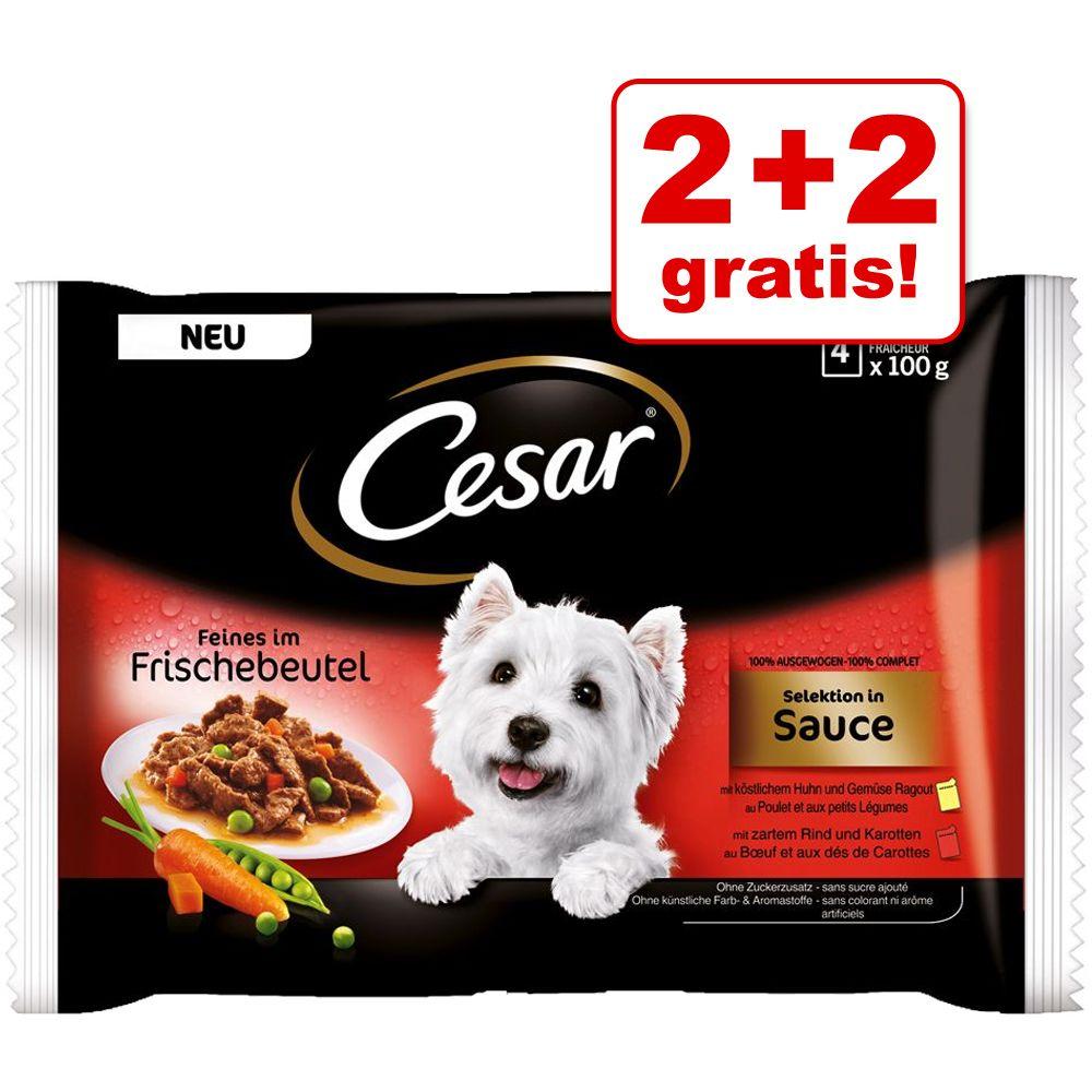 Image of 2 + 2 gratis! 4 x 100 g Cesar Le Delizie del Giorno - Selezione in gelatina