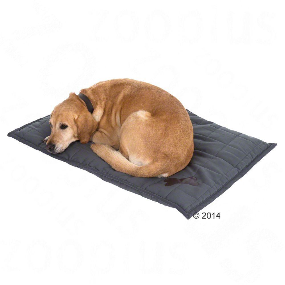 Freedom Dog Cushion 100x70x4cm