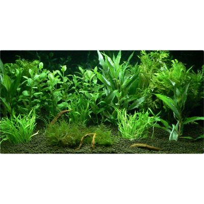 "Aquarienpflanzen Zooplants ""Garten Eden"" - 12 Pflanzen"
