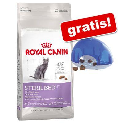 10 kg Royal Canin + Cat Activity