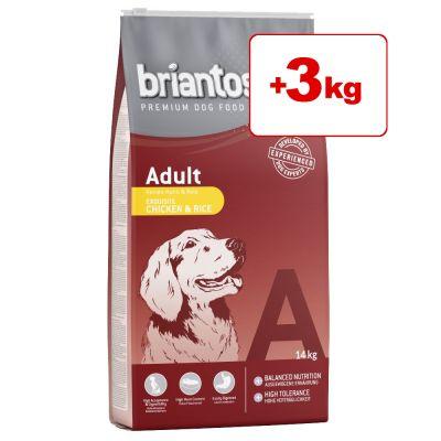 Briantos-kuivaruoka 17 kg: 14 + 3 kg kaupan päälle! - Junior